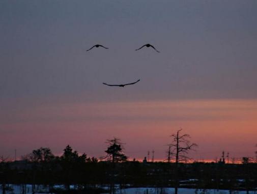 un sorriso dal cielo