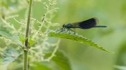 dragonfly-892677__340